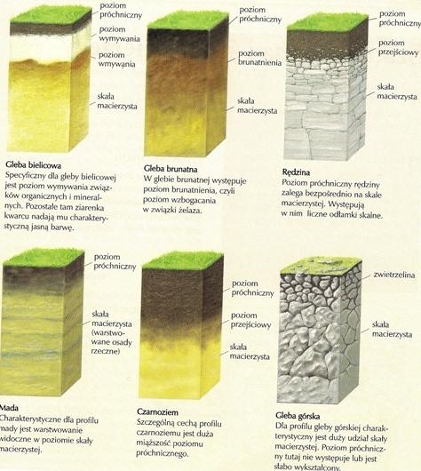 Rys. 2. Rodzaje gleb – profile glebowe